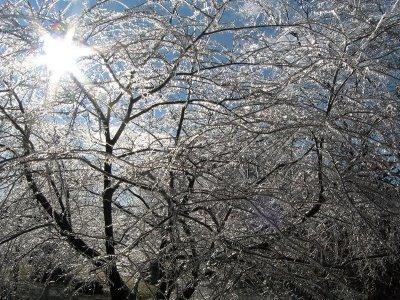 Ice Storm '08